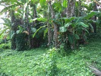 Prime Agricultural Land Lot Brgy Bulacnin Lipa Batangas