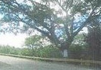 Foreclosed Vacant Lot (SFO-245) for Sale Diffun Quirino