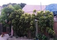 Foreclosed House & Lot (D-075) for Sale Manuela Homes Brgy Talon 5 Las Pinas City