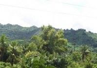 Foreclosed Vacant Farm Lot (LIP-119) for Sale Brgy Laiya Aplaya San Juan Batangas