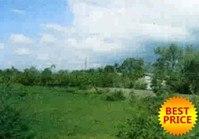 Vacant Farm Lot 164 for Sale Brgy Lomboy Sta Cruz Zambales