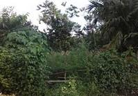 Vacant Farm Lot (LIP-218) for Sale Brgy Palasan Sta Cruz Laguna