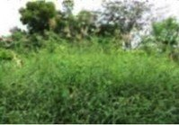 Foreclosed Vacant Farm Lot (T-075) for Sale Menzyland Subdivision Mojon Malolos Bulacan
