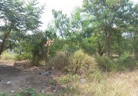 Foreclosed Vacant Lot (LIP-201) for Sale Saint Jude Village Phase 2-C Brgy Ibabang Mayao Lucena Quezon