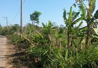 Foreclosed Vacant Lot (B-207) for Sale Rodeo Countryside Estate Brgy Esperanza Alfonso Cavite