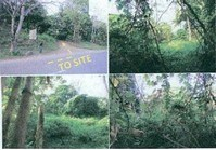 Foreclosed Vacant Lot (U-021) for Sale Brgy Sicsican Puerto Princesa Palawan