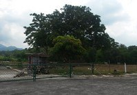 Vacant Lot 212 Sale Graceland Subdivision Tayabas Quezon