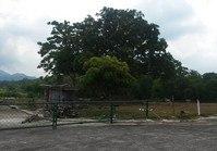 Foreclosed Vacant Lot (LIP-212) for Sale Graceland Subdivision Kamaysa Tayabas Quezon