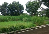 Vacant Lot 223 Sale Cyberville Subdivision Malolos Bulacan