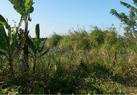 Vacant Lot 49 Sale Rodeo Countryside Estate Alfonso Cavite