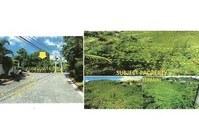 Foreclosed Vacant Lot 76 for Sale Brgy Talamban Cebu City