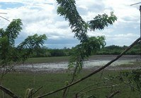 Vacant Farm Lot 105 Sale Alicante EB Magalona Negros Occidental
