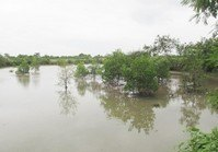 Foreclosed Vacant Farm Lot (BAC-107) for Sale Brgy San Jose EB Magalona Negros Occidental
