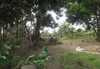 Vacant Farm Lot 121 Sale Brgy Sagasa Bago Negros Occidental