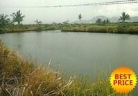 Vacant Farm Lot (NAG-038) for Sale Purok 6 Tabaco City Albay
