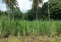 Foreclosed Vacant Lot (BAC-129) for Sale Poblacion Tayasan Negros Oriental