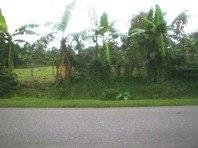 Abanon San Carlos City Pangasinan Foreclosed Vacant Lot Sale 0415473