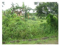 Happy Homes Greenview Daet Foreclosed Vacant Lot Sale 1150088