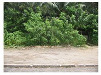 Happy Homes Greenview Daet Foreclosed Vacant Lot Sale 1200039
