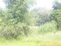 Foreclosed Vacant Lot for Sale in Padapada, Sta Ignacia, Tarlac (AN-0078233)