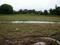 Foreclosed Vacant Lot for Sale in Brgy. San Aurelio First, Balungao, Pangasinan (AN-0955449)