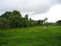 Sta Catalina Candelaria Quezon Foreclosed Vacant Lot Sale 0283114