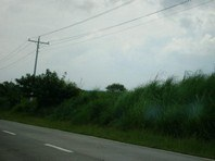 Foreclosed Vacant Lot for Sale in Sta Maria, Umingan, Pangasinan (AN-1323779)